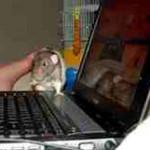 Сторожевые крысы защитили компьютеры от воров