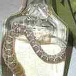 Китайца укусила маринованная змея