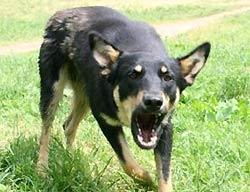 Вас покусала бродячая собака и кто в этом виноват?