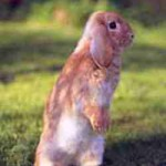 Синдром застывшего кролика